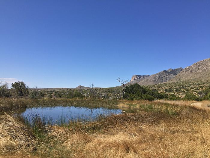 Manzanita Springs Guadalupe Mountains